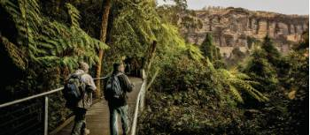 The Blue Mountains has a great variety of bush walks to suit everyone's fitness abilities | David Hill